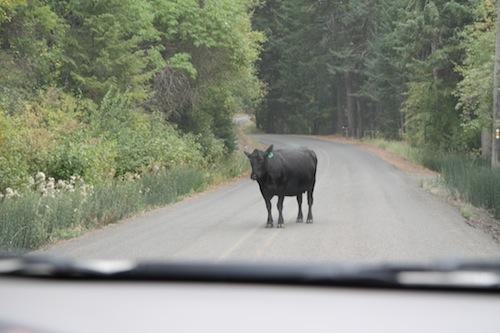 Move cow